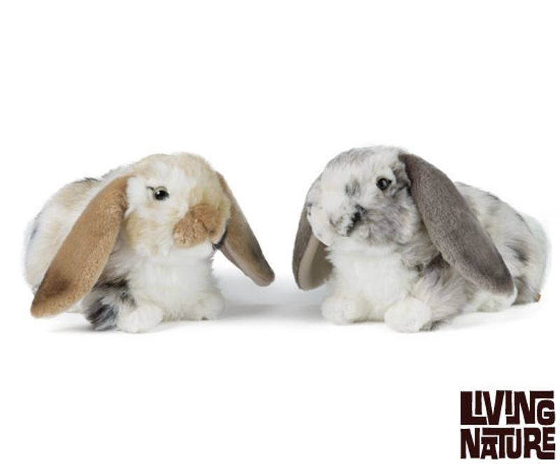 Dutch Lop Ear
