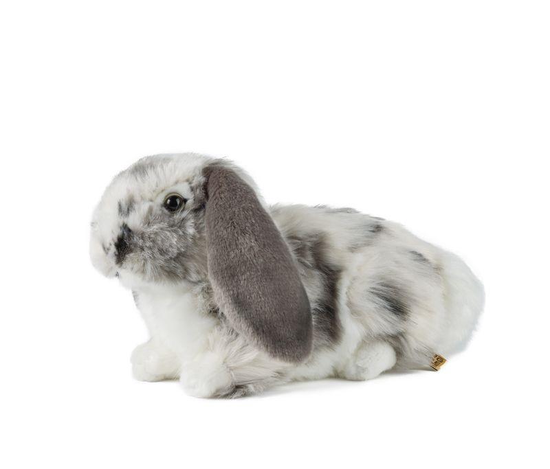 Grey Dutch Lop Ear