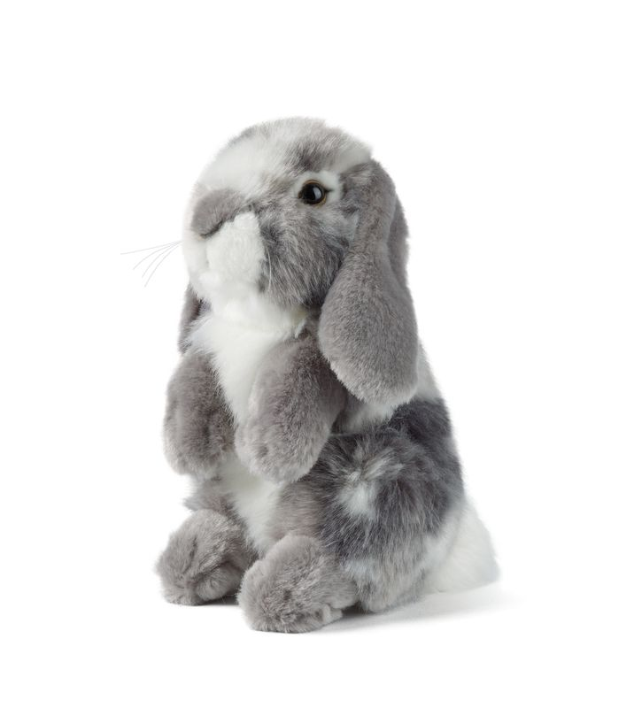 Grey Sitting Lop Eared Rabbit