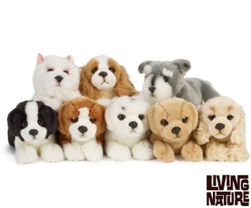 Puppy Small Assorted