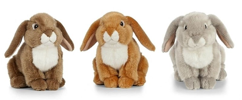 French Lop Eared Rabbit