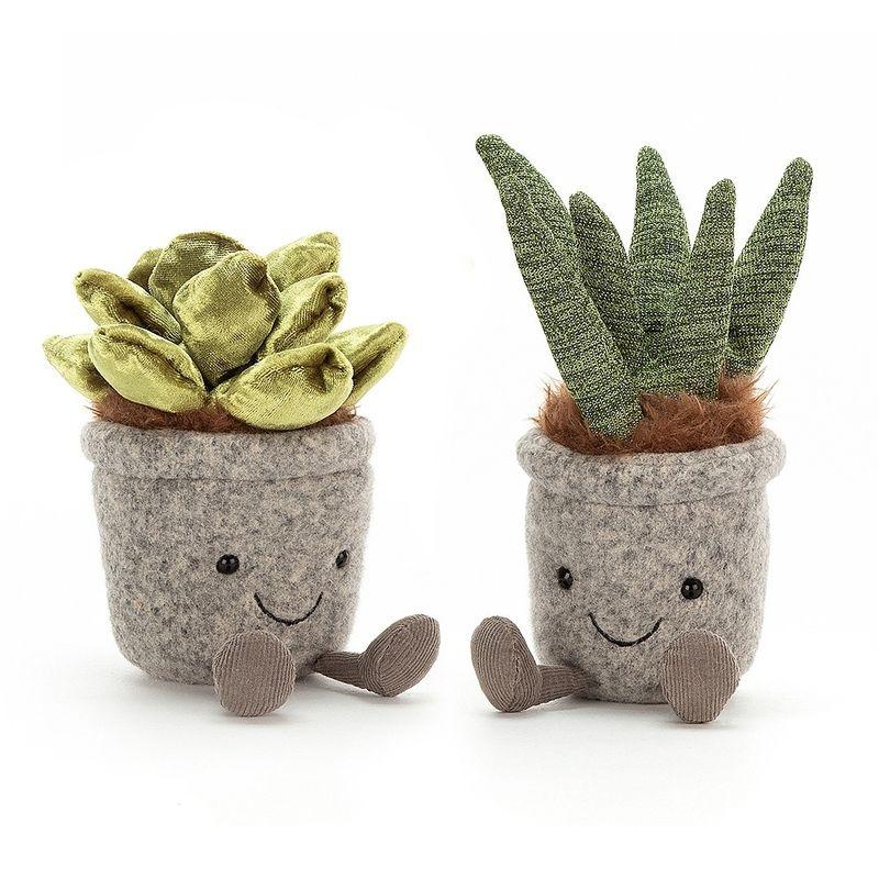 Silly Succulent Aloe
