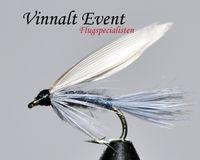 Blue Winged Stl. 12