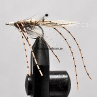 Shrimp Natural size 6