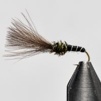 CDC Lake Fly