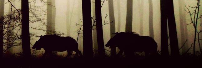 jaktknivar Sverige